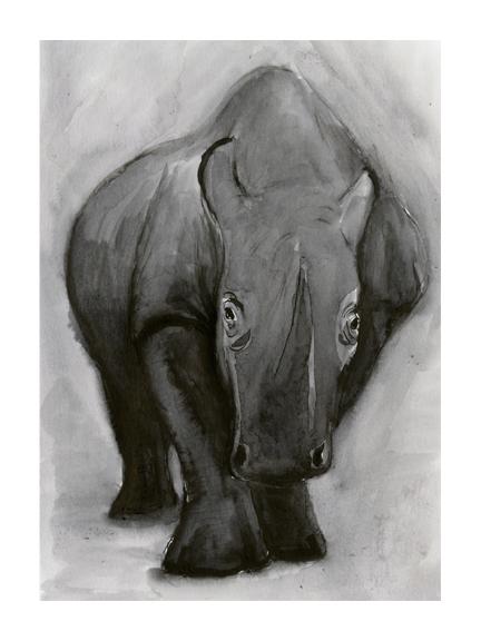 <p>Rhino</p>