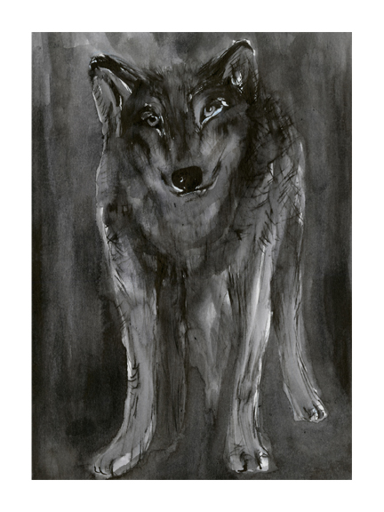 <p>Wolf</p>