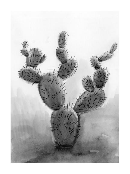 <p>Cactus</p>