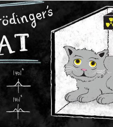 Schrödinger's Cat Mugs
