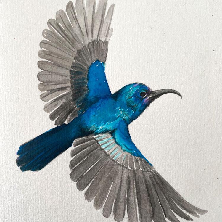 Palestine Sunbird Watercolor